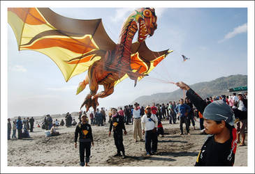 dragon taming
