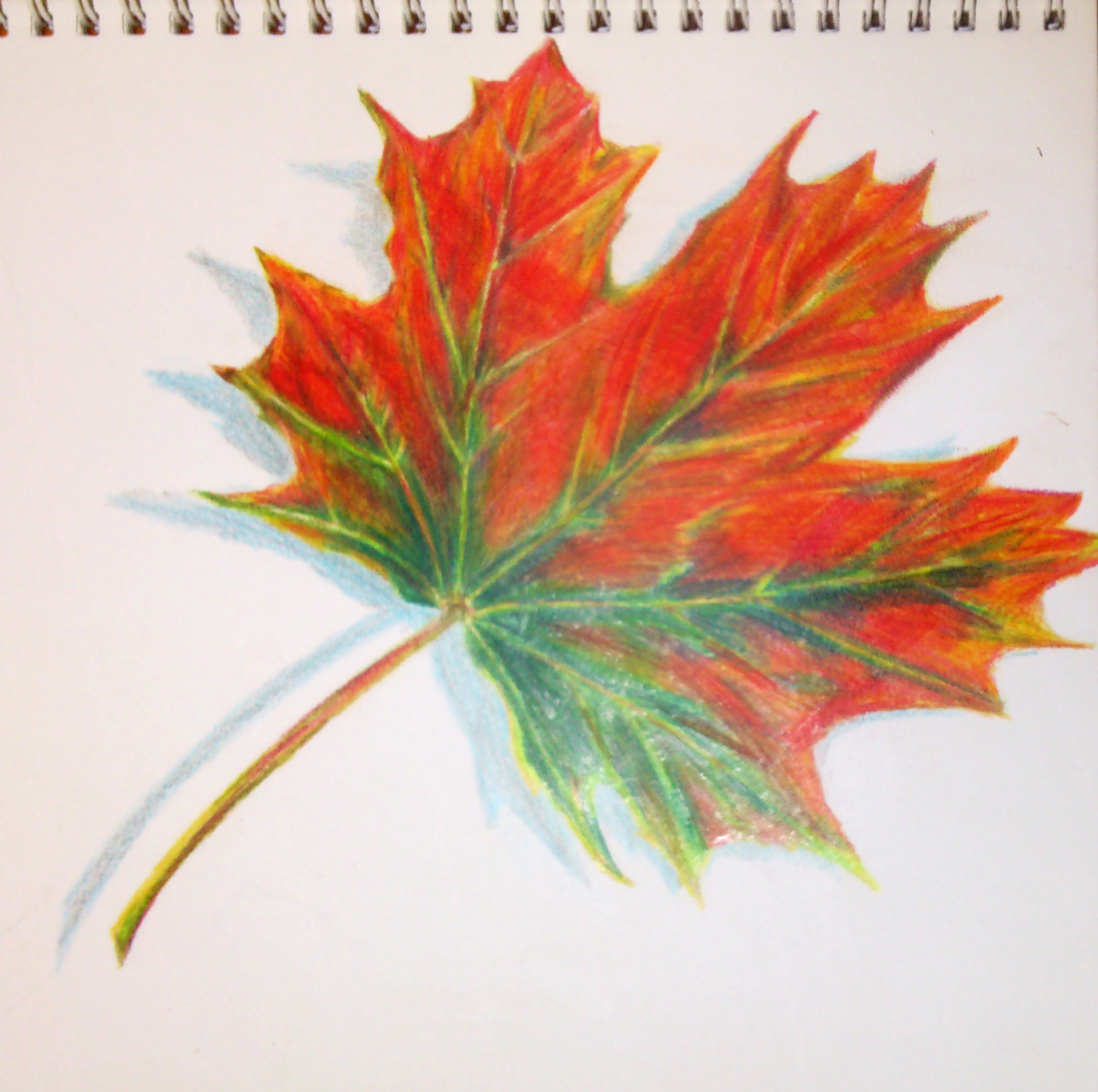 Autumn Leaf Colored Pencils By Kamilam94 On Deviantart