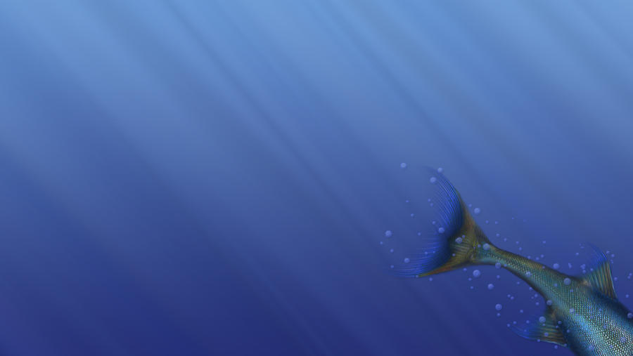 Mermaid tail wallpaper by Toreshii-Chann