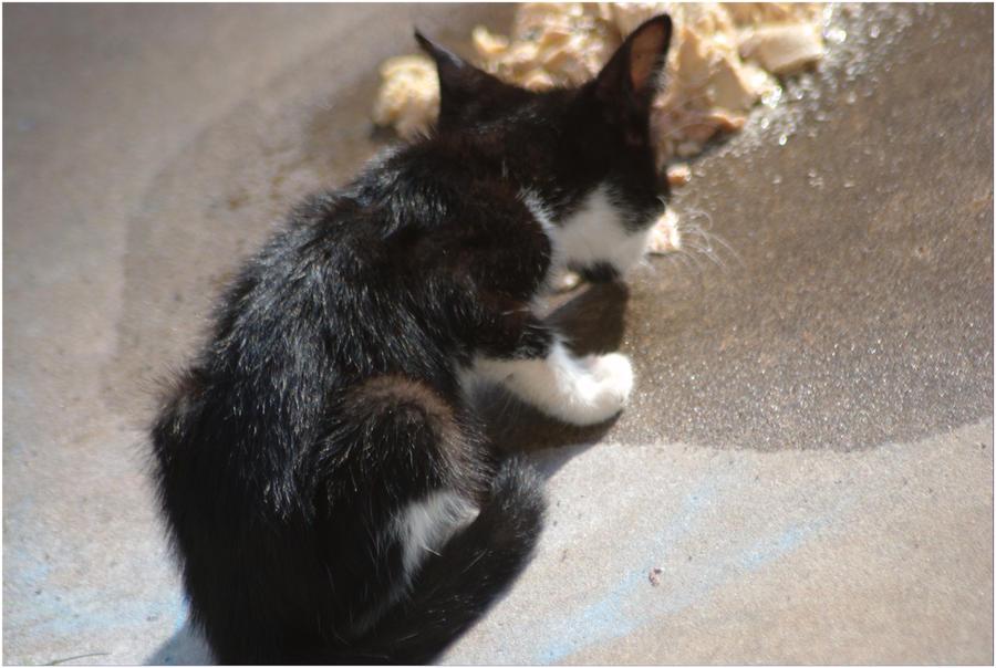 New Kitten by SuicideBySafetyPin