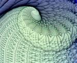 Seafoam Curl