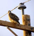 Pole Sitter