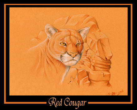 Red Cougar
