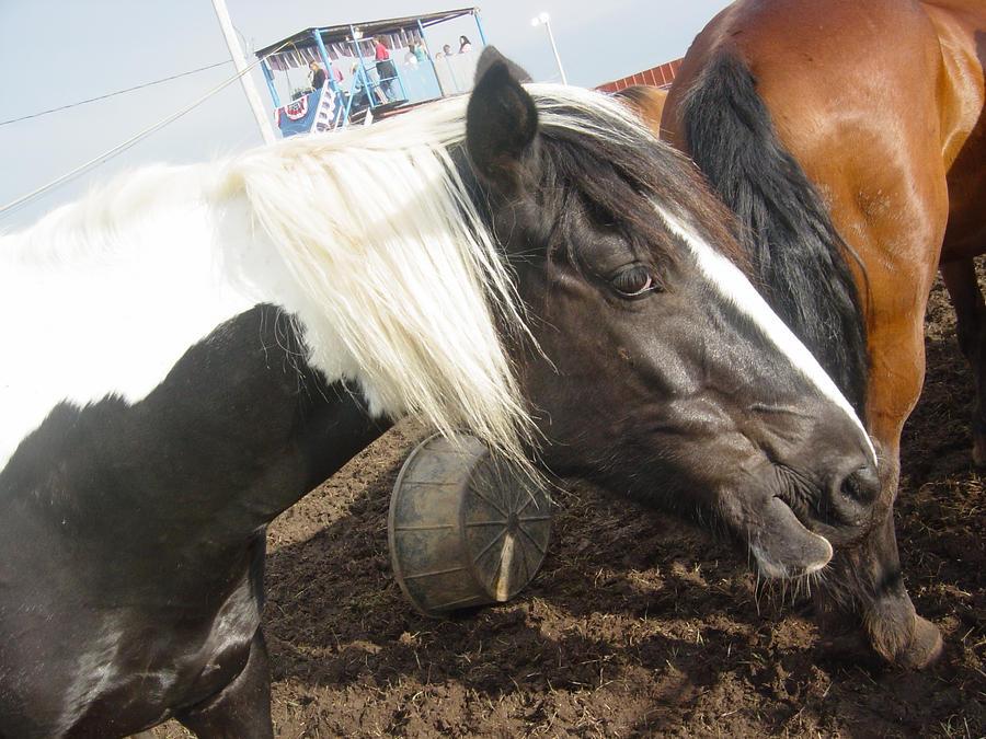 Black Tobiano Horse Stock 02 by xx-kitkatkitten-xx on ...