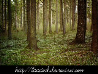 Forest Stock By Liisistock by shivamcreation02