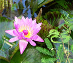 Violett Bloom