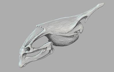Skull by KalebLechowski