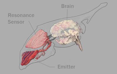 R'ha Communication Organs by KalebLechowski