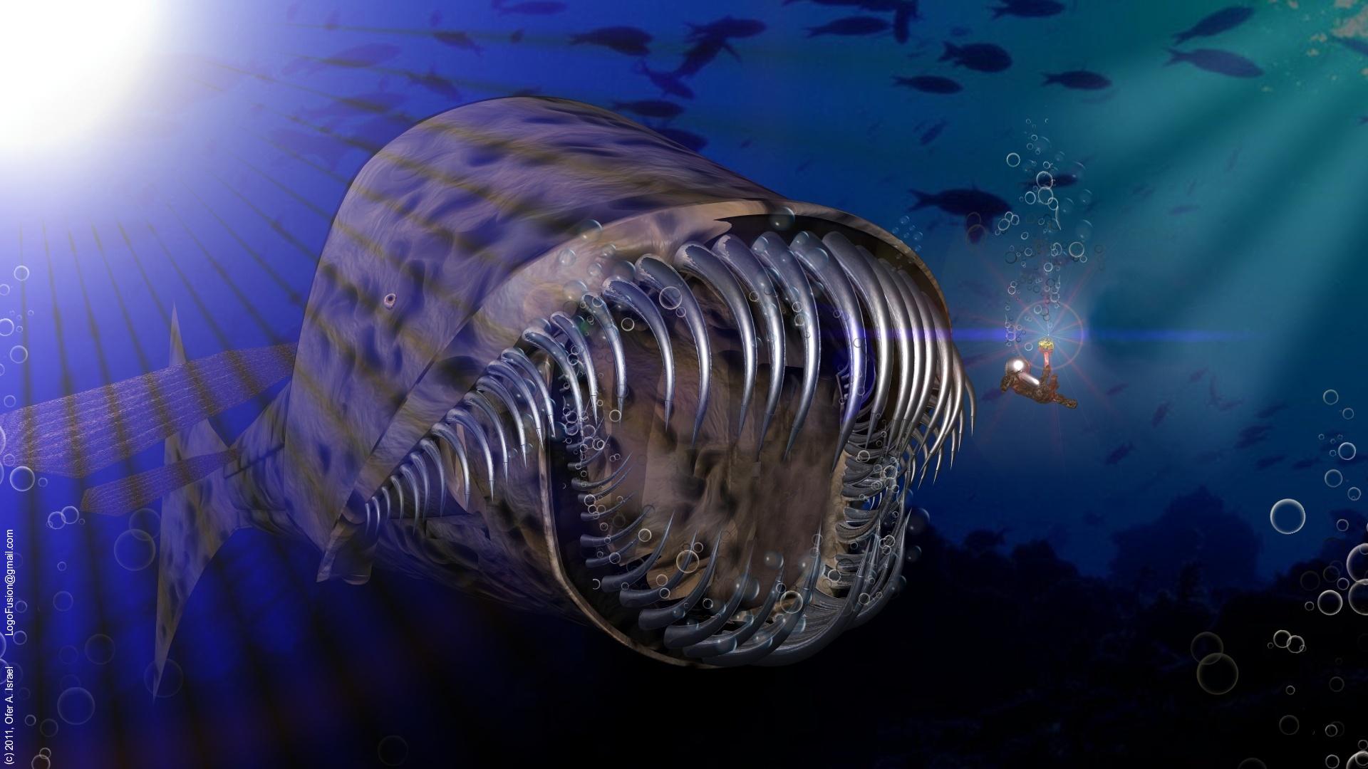 sawtooth whale - wallpaperh-o-t-g-o-d on deviantart