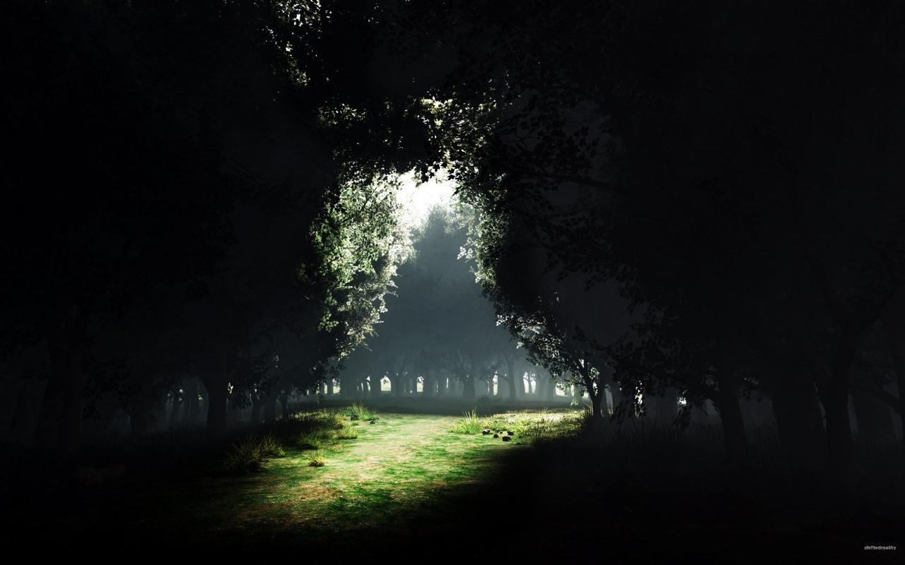 Dark Forest by bushma