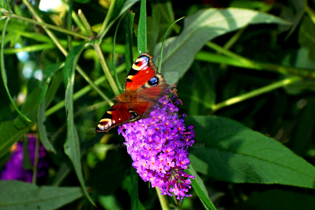 Green lilac and butterfly by angel0421 on deviantart for Lilac butterfly wallpaper
