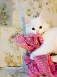 Kitty by MysticArya