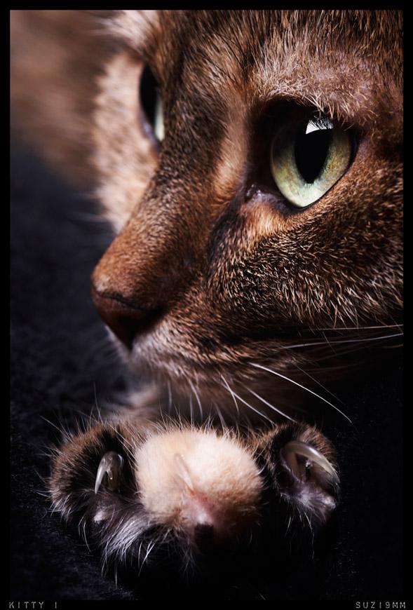 kitty 1 by suzi9mm