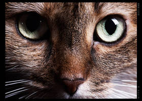 kitty 2 by suzi9mm