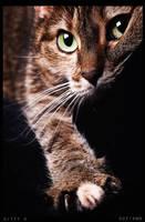 kitty 3 by suzi9mm