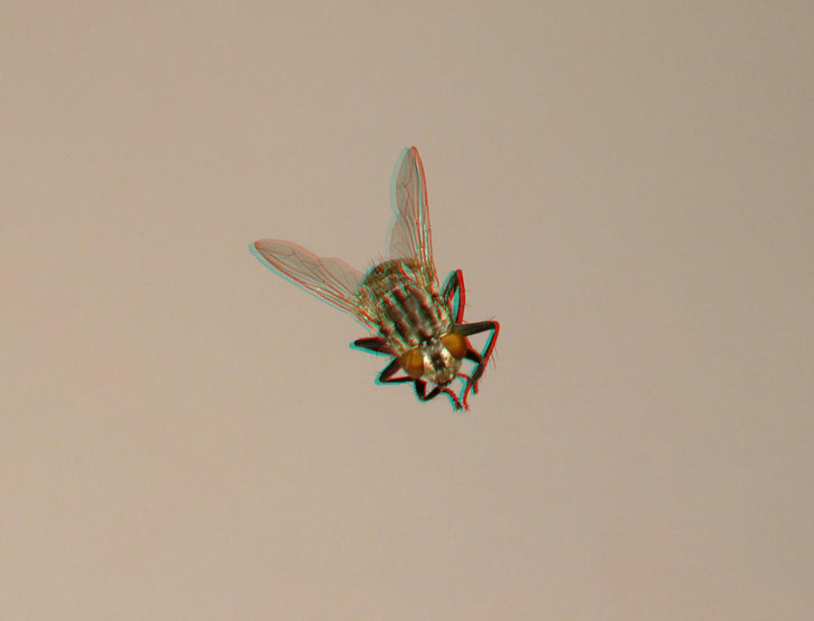 The flying fly - Anaglyph by jkutianski