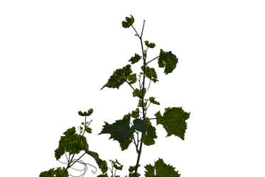 Branches 4 by CherrykaStock