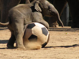 Elephant Soccer by breezy262