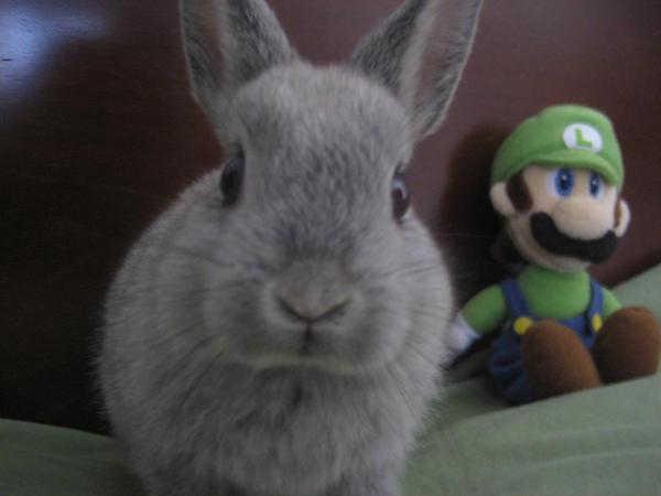 Nana and Luigi by who-stole-MY-name