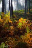 Warm forest by ChristopheCarlier