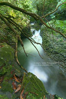 Green I by ChristopheCarlier