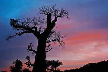 Baobab sunset by ChristopheCarlier