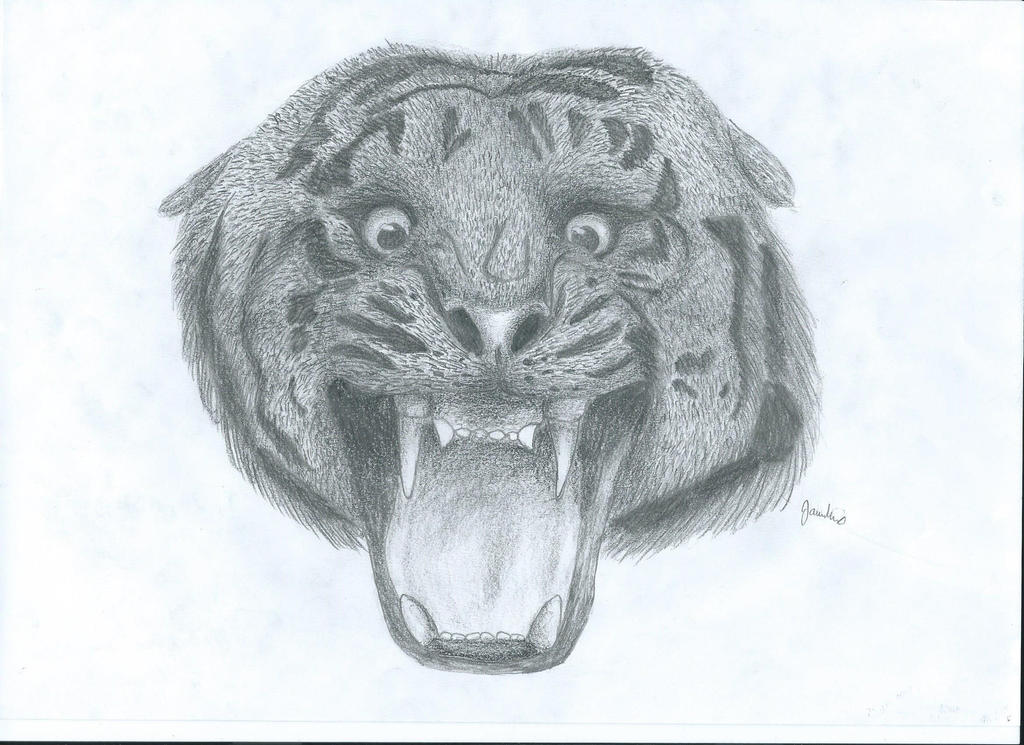 tiger - realistic drawing