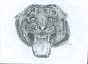 tiger - realistic drawing by LisiTisaKi