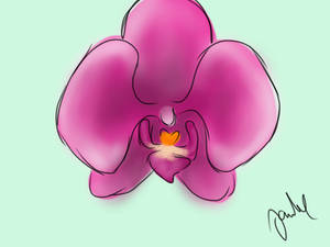 15min orchid