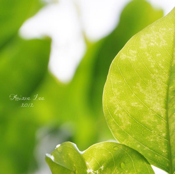 Leaf by arianeyani