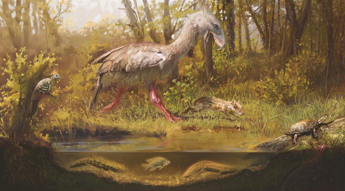 Eocene by Rolandi