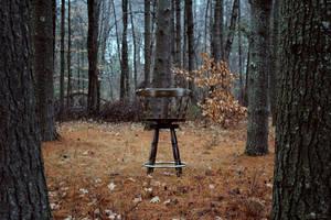 Week 49- solitude by iAmoret