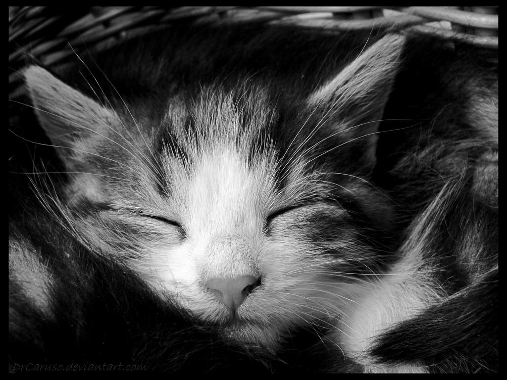 While you are asleep... by DrCaruso