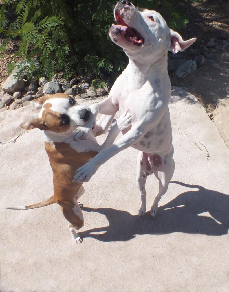 Dancing Dogs by MaliciousMarine