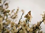 unoriginal butterfly by Moophlon