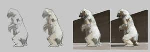 Polar bear Studies Process