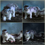 Snow Leopard Anime