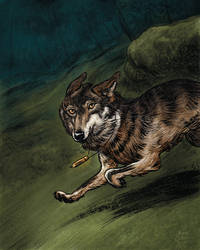 The Iberian Wolf by AndreIllustrates