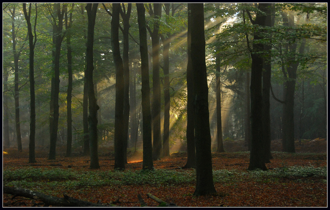 [Image: light_in_the_dark_forest_by_jchanders.jpg]