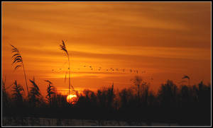 Distant sunrise geese