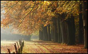 November in Groeneveld by jchanders