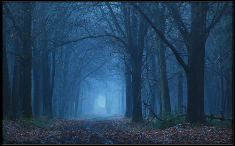 In the blue forest by jchanders