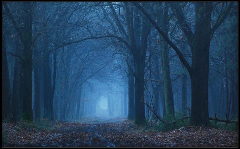 Quelle musique vous inspire le mieux ? (a l'instant présent) In_the_blue_forest_by_jchanders