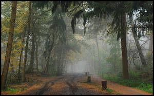 Into the misty October forest by jchanders