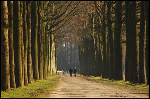 Walking on the December lane by jchanders