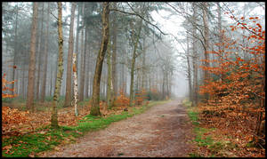 More misty forest walks ahead