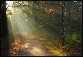 Autumnal morning forest tour by jchanders