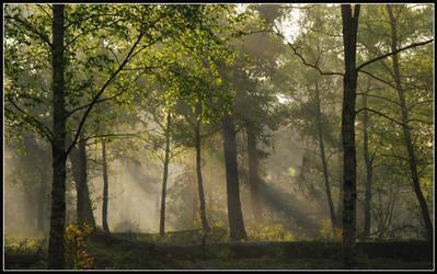On a misty April morning ... by jchanders