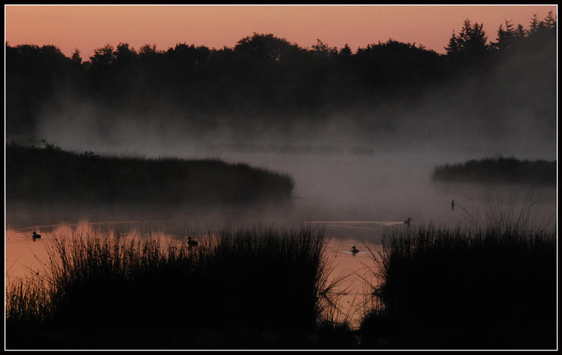 Early_at_the_forest_lake_by_jchanders.jp