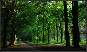An early morning forest walk by jchanders